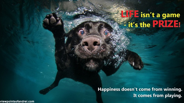 dog_black_underwater_swimming_water_74417_1920x1080-copy