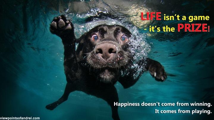 dog_black_underwater_swimming_water_74417_1920x1080-copy
