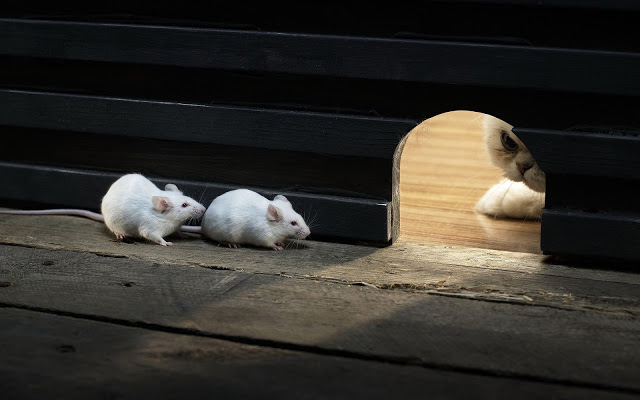 funny-wallpaper-with-cat-and-mice